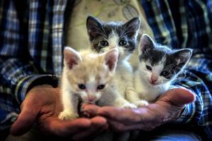 Vill man köpa en kattunge måste man antingen redan ha en katt hemma, eller så måste man köpa två. Det är viktigt att inte katten känner sig ensam säger Ulla Björnudd.
