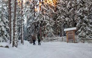 Hantverksprogrammet vid Skogsarbetarbyn i Snöån kommer med stor sannolikhet att avvecklas.FOTO: LEIF OLSSON
