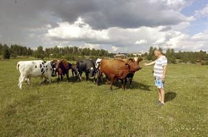 Staffan Liljegård tar sig en pratstund med gårdens kor.
