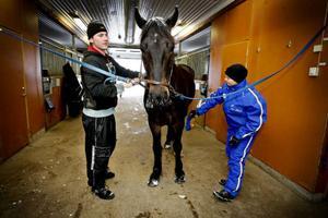 Benjamin Bergström, 17, och rektorn Eva-Lena Blom hjälps åt att göra i ordning det  6-åriga kallblodet Orrient.