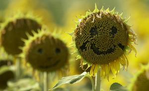 Växterna är smartare än du tror.