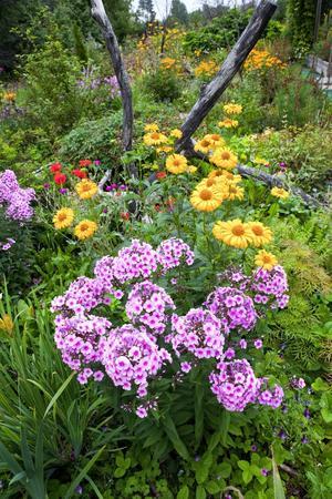Sensommarens färger. Flox, vallmo, penséer och dagliljor är några av alla de växter som samsas i den del av trädgården, som Gunilla kallar den moderna.
