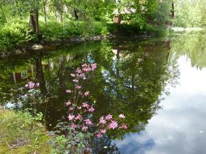 Akleja i vattenbrynet