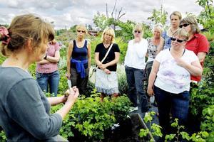 Marie Gunnarsson berättar för deltagarna i trädgårdskursen hur man kan föröka en liljelök.Foto: Henrik Flygare
