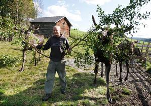 Sonen i huset, Mads Jektvik, jobbar med att sköta älgarna och var guide till gårdens besökare.