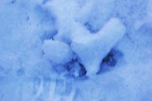 Detta hittade jag när jag laddat in foton, tog några på snön som rasat ner från taket. Kul överraskning med hjärtat.