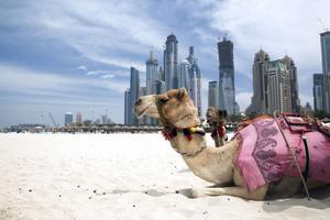 Dubai blir sommarresmål hos Apollo.