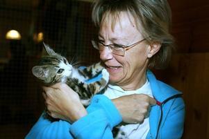 ÄLSKAR KATTER. Eva Ekström, från Hofors, har haft jourhem för katter sedan 1 augusti. Här gosar hon med en av sina sex jourkatter.