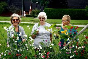 Blomsterprakt. Lisa Pettersson och Ritva Svensson beundrar luktärterna på Else-Marie Göthlins kolonilott.