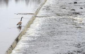 I Ljusnan är vattenflödet just nu inte särskilt högt och årets vårflod ser ut att bli en lugn historia.