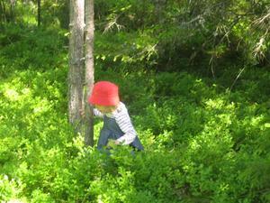 Vårt barnbarn Moa i blåbärsskogen på Väddö