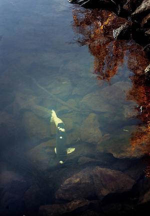 Fiskarna drabbas av hemska svampinfektioner.