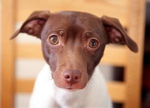 Hunden Flisan och hennes matte Anita Rahm fick åka 50 mil till Uppsala för att få veterinärvård.