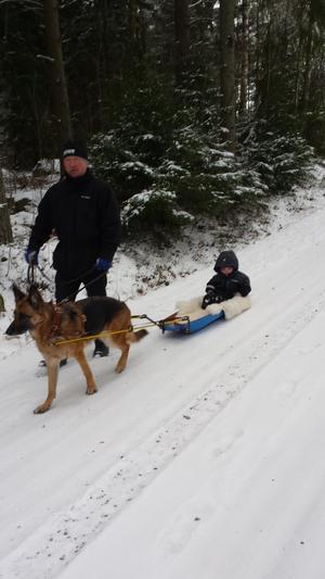 Farfar och Thea på pulkaåkning med hunden Dilba.