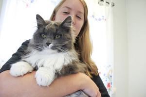 Mari Ekengren sitter med i styrelsen i Djurskyddet Bill & Bull. Hon tycker att det är tråkigt att de blivit anklagade för att kidnappa och sälja katter.Här gosar hon med den otroligt tillgivna, och för tillfället hemlösa, katten Hubbe.