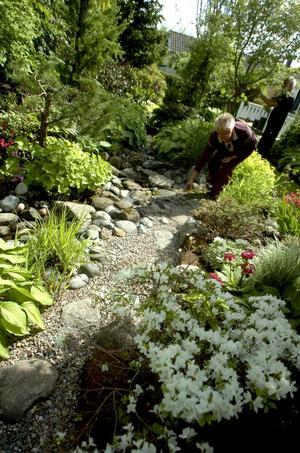 May och Ingemar Larssons trädgård är vida berömd. De brukar ta emot busslaster med trädgårdsentusiaster från hela landet. Så arbetar de också flera timmar om dagen med att se till att alla växter är felfria.2Från början fanns här ett potatis- och jordgubbsland, men det har fått ge vika för en damm. 3Färgkombinationer och kontraster är Mays favoritområde när det gäller trädgårdsskötsel. En lysande gul clematis som ringlar in i alunroten tillhör en av de nya planteringarna. 4May gillar blad i olika nyanser och strukturer.5Färgsprakande växter fyller trädgårdens alla hörn.