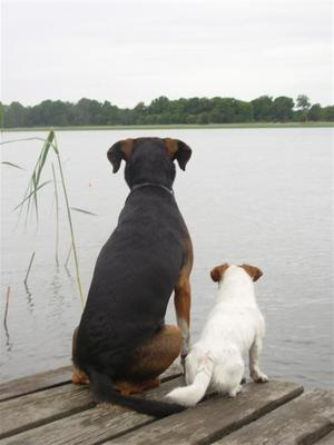 De tröttnar aldrig på att spana efter fisk...