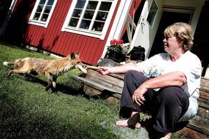 Arbetarbladet besökte gården 2005. En tam räv kom fram och ville ha mat av dåvarande ägaren Gunilla Hellsing.