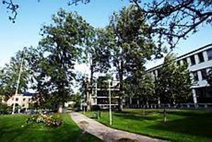 Foto: NICK BLACKMON Farliga träd. Träden vid länsstyrelsens entré har många torra grenar, grenar som riskerar att träffa någon förbipasserande. Länsstyrelsens skyddsombud, Urban Sjölander, har nu tröttnat på att fastighetsägaren Norrporten aldrig gör någonting        åt problemet.