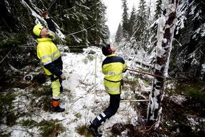 Fler stormar vid ett förändrat klimat riskerar att öla stormskadorna på skogen.