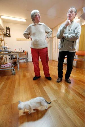Ulla Björnudd och Rolf Eriksson tycker att katter ska få vara ute, om hemmen de lever i ligger så till att det inte stör andra.