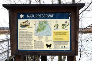 Skogen som inte längre finns låg intill naturreservatet vid Indalsälvens delta, på vägen ner till Smackgrundets badplats.