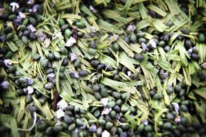 De små gummikornen fyller ut mellan plastgrässtråna. Det gröna, miljövänligare, granulatet är mycket dyrare och slits ner fortare.