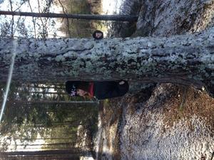 Skogspromenad till kolarbysjön.