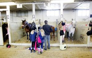 Innan uppvisningarna började samlades många entusiaster i stallet för att göra i ordning hästarna.