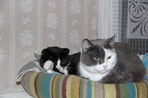 Nisse och Selma vilar sig.