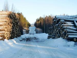 Domarna som ger ägare till fjällnära skog rätten till ersättning när staten hindrar dem från att avverka togs emot med jubelrop hos skogsägarna. Men för Skogsstyrelsen har de inneburit problem som nu har antagit akuta proportioner.