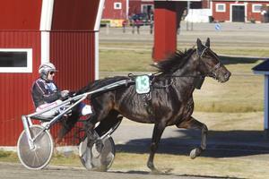 Segervane Bergsåkertränare Ulf Ohlsson tog hem championatstriden.