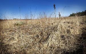 Om man nu absolut vill ta bort fjolårsgräset, använd en lövräfsa och räfsa ditt gräs. Eller låt gräset vara kvar, för det går inte många dagar förrän det nya gröna gräset täcker över fjolårsgräset, skriver Martin Stugholm.