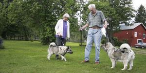Karin och Gunnar Näslund har belönats med hundvärldens Oscar, Hamiltonplaketten. Lina och Ronja, båda av rasen norsk älghund grå, är båda svensk dubbelchampion.