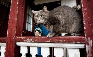Svanslöse gårdskatten Helge håller utkik från verandaräcket. Sören och Gun Erikssons barnbarn, Valdemar, tittar in varje dag.