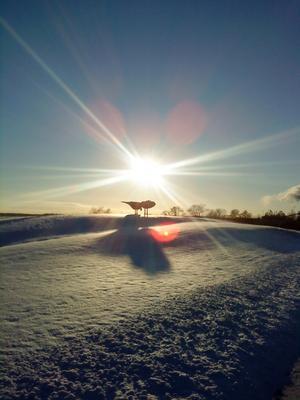 Var ute på en promenad och tyckte fåglarna såg så fina ut i snön och solljuset.