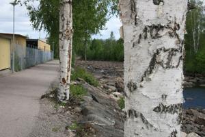 Kommunen får delvis pengar från EU för projekt UTI Edsbyn som bland annat omfattar en gång- och cykelväg längs med Voxna älv. Nu kan man börja se hur det kommer att bli.