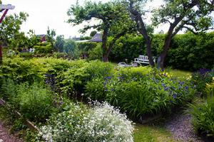 Generös grönska och blommande perenner i Augustos trädgård.