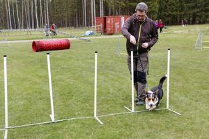 Prova på. Aldo är en ettåring av rasen Welsh Corgi. Tillsammans med sin husse Anders Moch testar han att springa i sicksack.