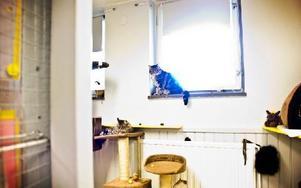 """""""De som inte kan ta hand om sig själva, ska inte ta hand om djur"""", säger Maja. Foto: Sofie Lind"""