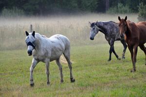 Underbara hästar som har sitt bete utanför mtt hus!!!