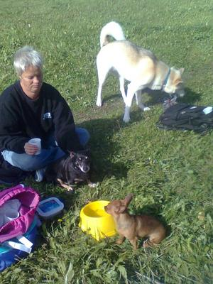 Här är några av hundarna som var med på en utflykt,dom gillar verkligen att strosa runt sen komma o få lite godis för att sen leka