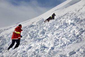 Fjällräddare, skidpatruller, polis och fyra lavinhundar deltog i sökandet efter eventuella offer när två laviner gick inom loppet av några minuter i Bydalen 2010.