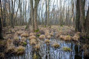 Två procent av åkrarna ska bli våtmark, trots att Sverige bara till hälften är självförsörjande på livsmedel.