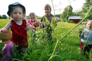 Beata Andersson, Wilma Andersson, Oskar Ytterbom och Josefin Ytterbom nyttjar allemansrätten genom att plocka blommor. Blommor, bär och svamp får plockas fritt. Tänk dock på att vissa arter är fridlysta.