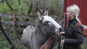 Catrine matar matglad åsna hemma i Hagby.