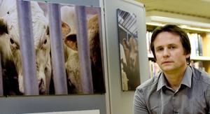 Erik Lindegren från Stockholm är en av få fotografer som släppts in på ett svenskt slakteri. Vid två tillfällen följde han djuren under deras sista timmar från transport till färdigt kött.