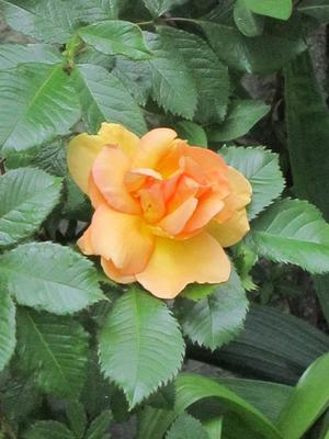Glöm aldrig att ge en blomma till den man älskar!