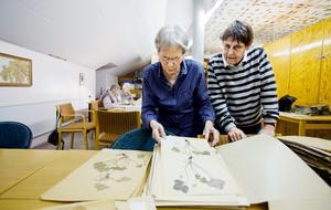 Samling. Ingrid Engström och Lena Lindgren arbetar med den stora samling växter som ingår i Örebroherbariet. 80 000 pressade växter finns uppsatta på pappersark och förvaras i stora skåp.