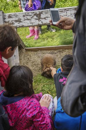 Kaninerna var stora som katter.